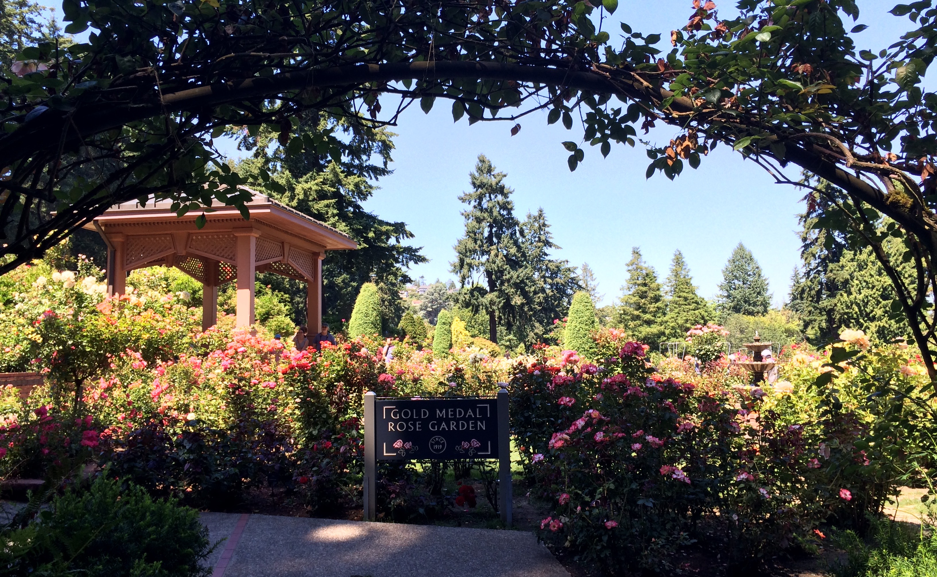 Photo of a field trip to the International Rose Test Garden at Mathcamp 2014